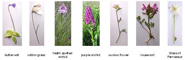Flora around Arisaig