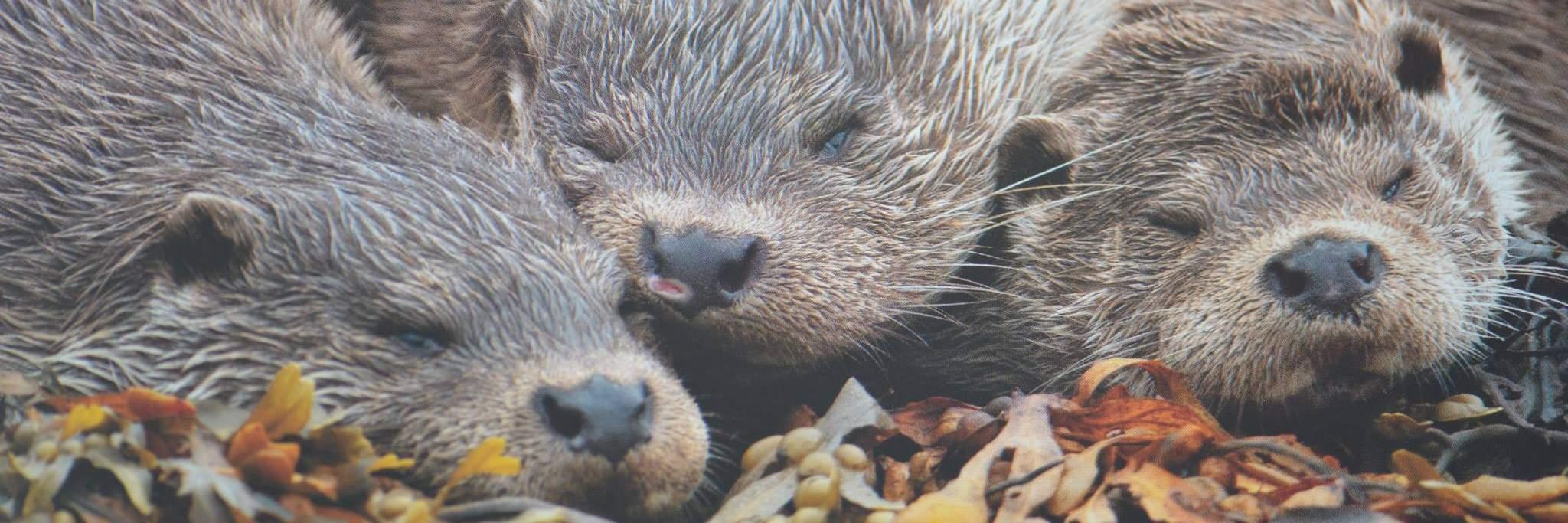 Wildlife in Perthshire