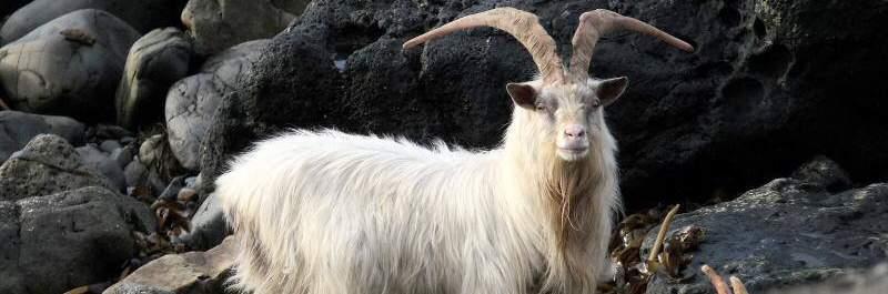 Wildlife in Argyll