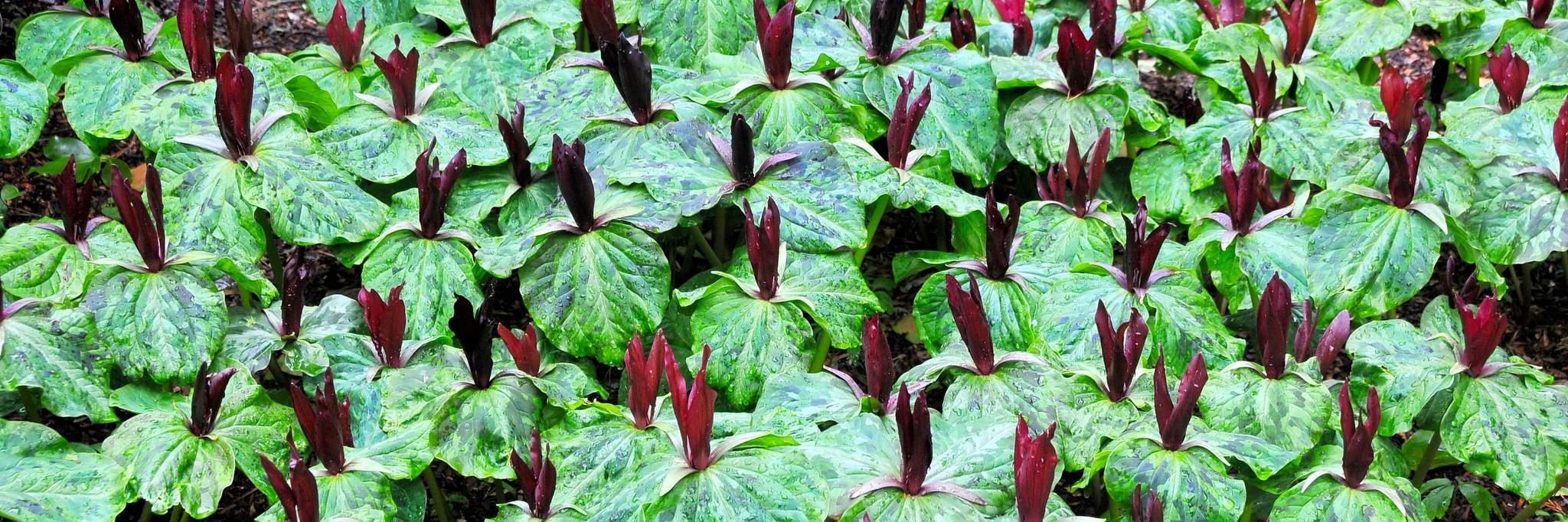 Gardens in Ayrshire
