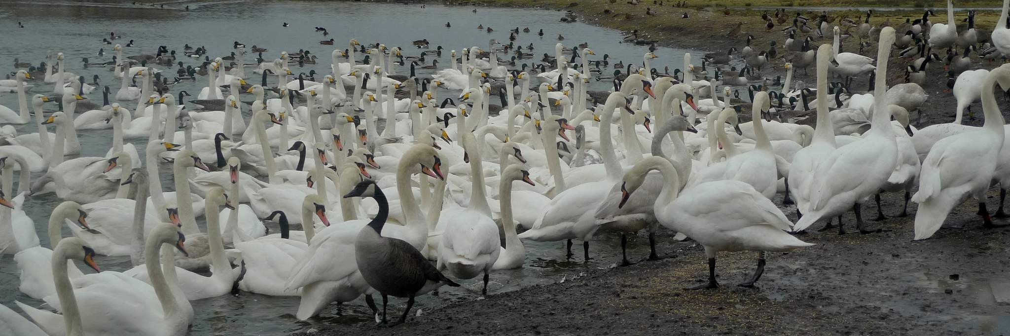 Wildlife in Dumfries and Galloway