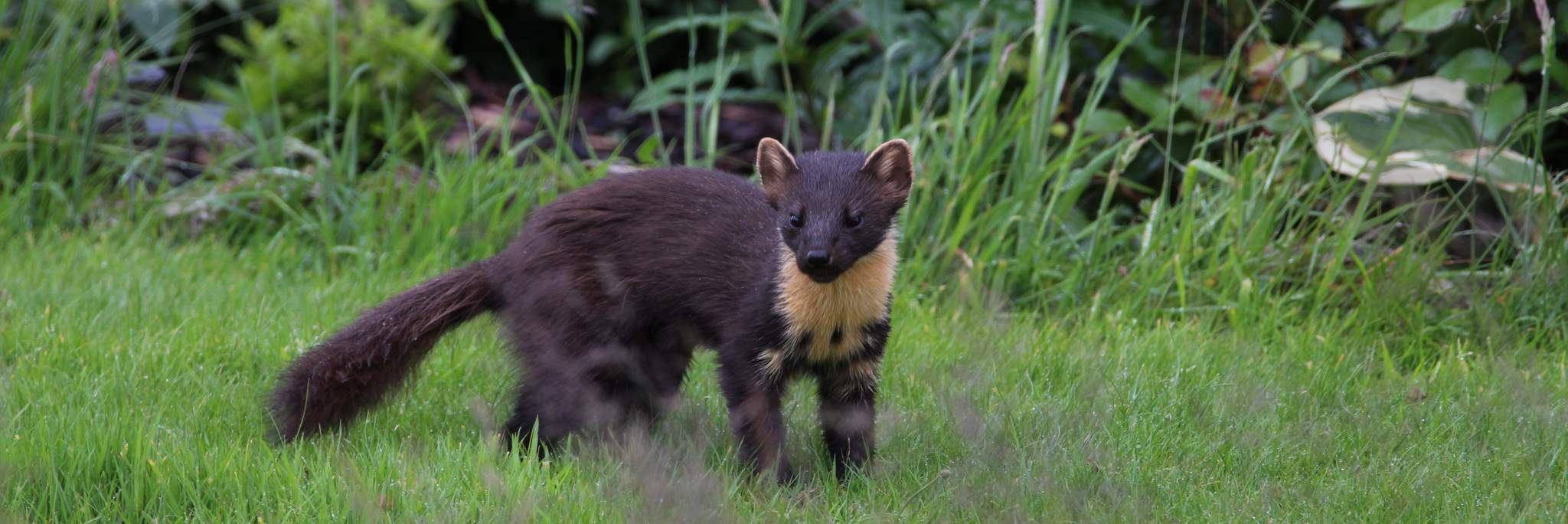 Wildlife in The Scottish Borders