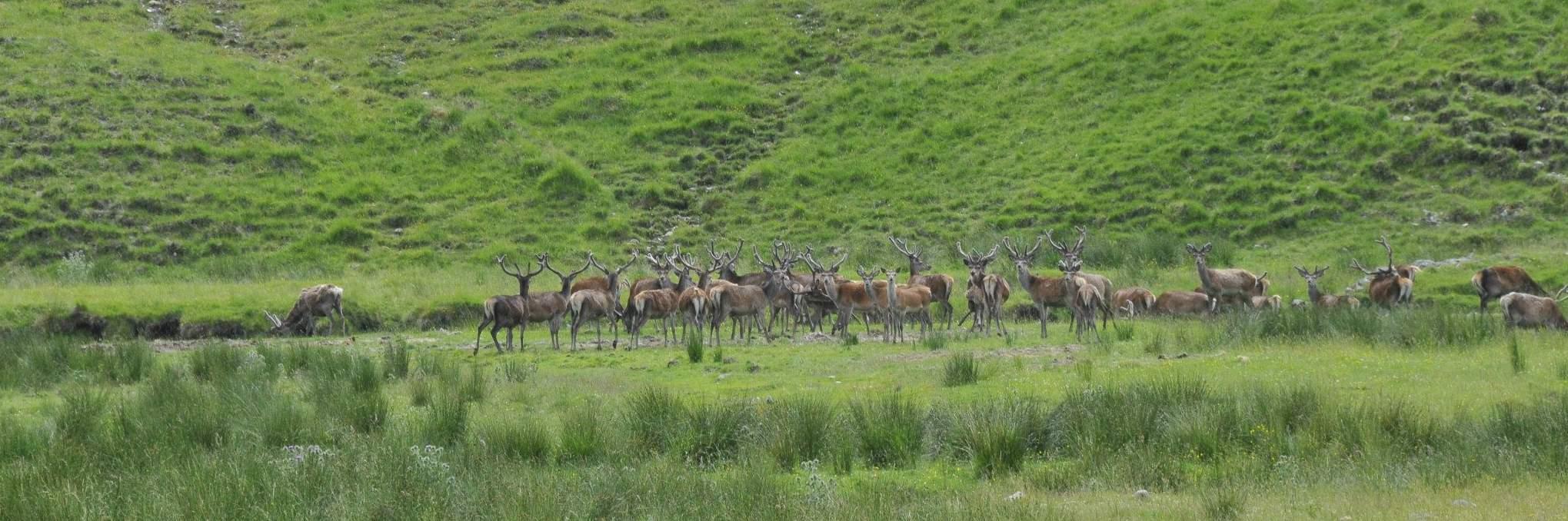 Wildlife in Ayrshire & Arran