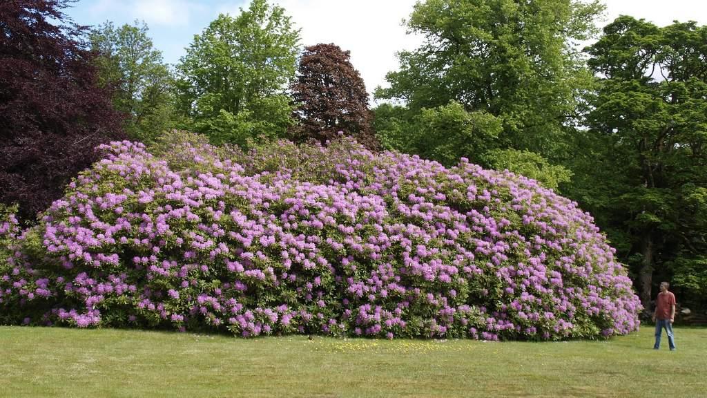 Gardens at Spean Lodge