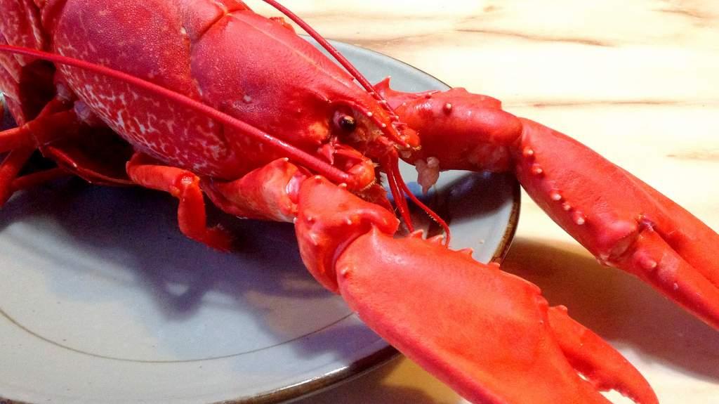 Lobster served at Ruddyglow Park