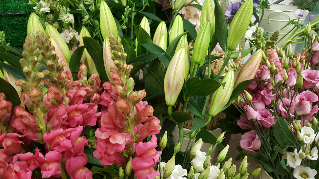 Achray Farm Shop has Pretty Little Flowers